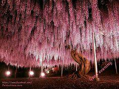 Beautiful japan kyoto