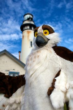 I don't often like avian fursuits, but this one is really well made.