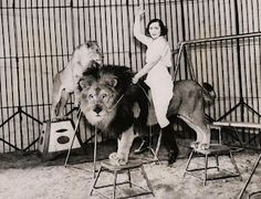 lion tamer photo | Lion Taming Part Two
