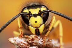 Wasp Photo by Jules Rad -- National Geographic Your Shot