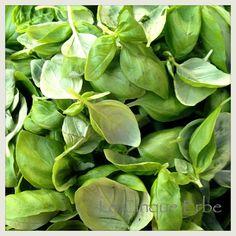 Basilico di Prà - Laboratorio del Pesto al Mortaio con Slow Food #liguria