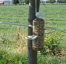 Bottle and wooden spoon bird feeder.
