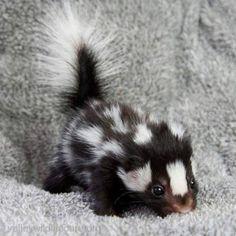 Baby skunk (81 pieces)