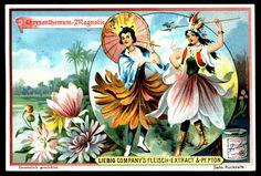 "Liebig's ""Flower Girls""  1898. Chrysanthemum & Magnolia"