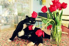 romantic cat looking for a b.f