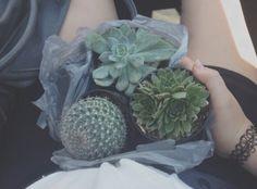 - ̗̀ plants are friends ̖́- Cacti And Succulents, Planting Succulents, Cactus Plants, Planting Flowers, Small Cactus, Soft Grunge, Pale Tumblr, Plants Are Friends, Plant Aesthetic