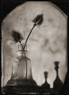 Photographie, Grand format dans Objet, Nature morte, FKD 13x18, wet-plate collodion - Image #225329