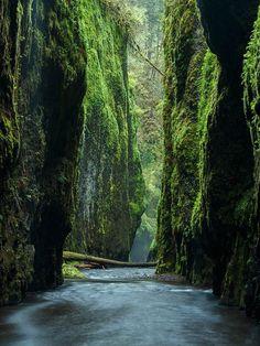 Oneonta Gorge - Oregon - #photography