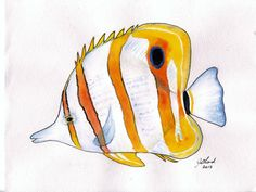 Watercolour painting study of a Beaked Coralfish, original, tropical fish, A4 size, unframed. $40.00, via Etsy.