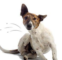 parasitos externos gde Tus mascotas sin pulgas de forma ecológica y natural