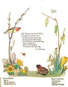 Feb. 1905 - Morning Earth Artist/Naturalist Edith Holden