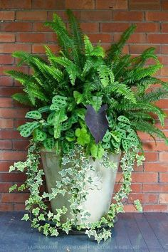 Ivy, ferns and other tropical plants in a tall white stone pot against a red brick wall. Ivy, ferns and other tropical plants in a tall white stone pot against a red brick wall. Container Flowers, Flower Planters, Container Plants, Garden Planters, Container Gardening, Flower Pots, Fern Planters, Ferns Garden, Gardening Vegetables