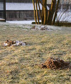 Alle Jahre wieder: Angriff der Wühlmäuse