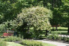 Seks kule klatreplanter du vil lykkes med - Tusenfryden Climbers, Sidewalk, Garden, Plants, Walkway, Garten, Flora, Plant, Lawn And Garden