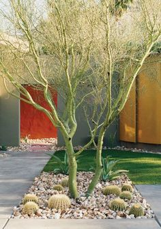 Modern Garden in Palm Springs, California