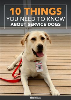 Do you know these facts about service dogs?