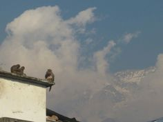 #Clouds, #monkeys 'n #mountains in #Himalaya #India