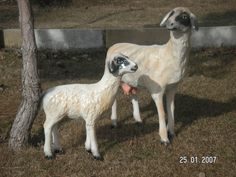 Koyun Heykel Goats, Animals, Animales, Animaux, Animal, Animais, Goat