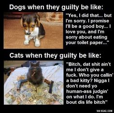 Dogs vs Cats - which is better? Cx