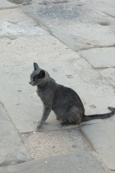 Cats In Ancient Egypt, In Ancient Times, Egyptian, Animals, Animales, Animaux, Animal, Animais