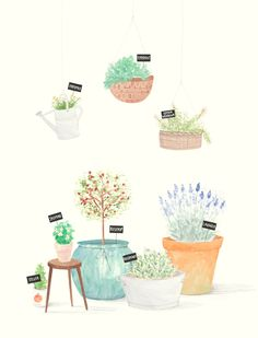 Hanging and potted plants illustration