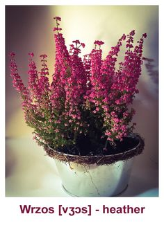 Polish Language, Ps, Plants, Plant, Photo Manipulation, Planets