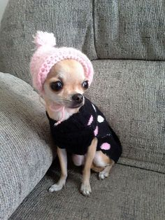 Effective Potty Training Chihuahua Consistency Is Key Ideas. Brilliant Potty Training Chihuahua Consistency Is Key Ideas. Cute Baby Animals, Animals And Pets, Funny Animals, Cute Puppies, Cute Dogs, Dogs And Puppies, Doggies, Baby Chihuahua, Chihuahua Clothes