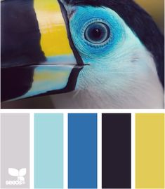 Color Squawk: Icey Gray, Aqua, Tropical Blue, Black and Yellow