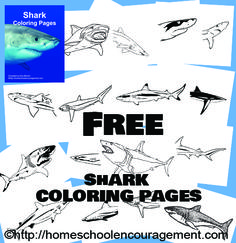 16 Free Shark Coloring Pages! (Is Your Homeschool Ready for Shark Week?) from #Homeschool Encouragement