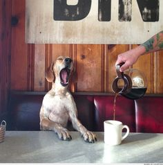This is me in the morning too!