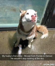 #Funny #husky #dog snow Florida