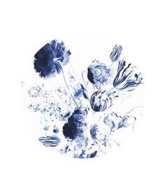 Royal Blue Flower Wall Murals and Photo Wallpaper from KEK Amsterdam. Dutch Design Wallpaper with Flowers and Floral for your interior. Blue Flower Wallpaper, Sea Wallpaper, Photo Wallpaper, Royal Blue Walls, Royal Blue Bedrooms, Flower Backgrounds, Colorful Backgrounds, Royal Blue Flowers, Exotic Flowers