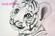 tiger drawing | ... 28th of September 2010 – My Tiger cub speed drawing is finally here
