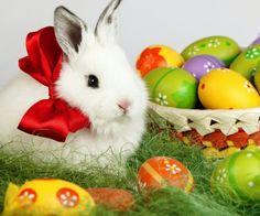 Καλο Πασχα!!!