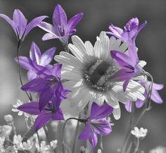 purple flower color splash ~
