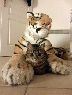 Se sentir en sécurité by AoneToad on Flickr.i wanna be a tiger.