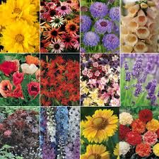 Image result for pictures of perennials