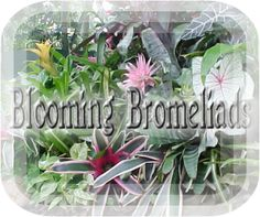 Bromeliads - Everything You Ever Wanted to Know About Them!