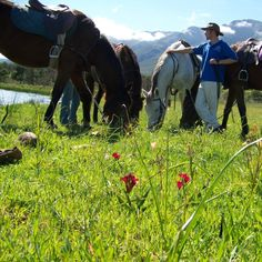 Stunning scenery and excellent horse riding opportunities in Tulbagh, just over an hour from Cape Town - Horse riding trails in Tulbagh, Western Cape, South Africa Trail Riding, Horse Riding, Amazing Adventures, My Ride, Cape Town, Great Places, South Africa, Westerns, Scenery