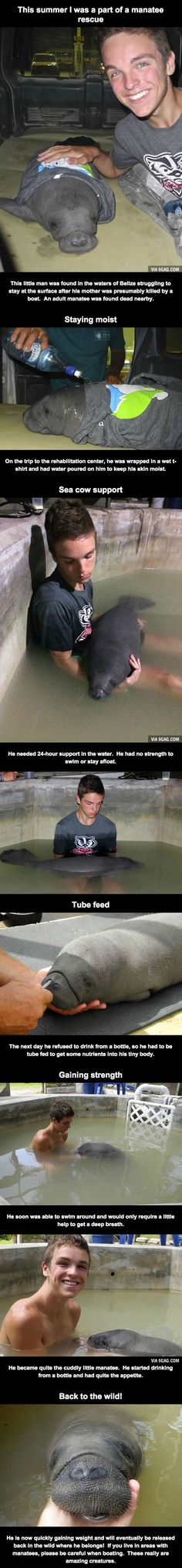 The tale of this baby manatee being saved is touching and beautiful