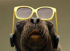 Funny Animals with Glasses photo