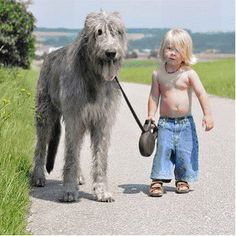 A dog's purpose from a 6 year old … view post at beartales.me/2013/02/27/a-dogs-purpose-from-a-6-year-old/