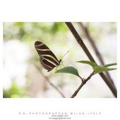 #macro #butterfly #trip #macrolens