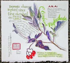 Pam Johnson Brickell. Nature, journal, sketchbook, notebook, dairy, words and images, drawing.