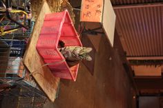 [EOS 650D] 0917︰波波,茶餐廳的招財貓。