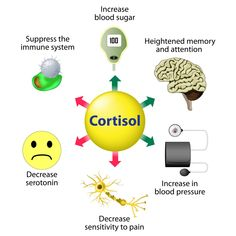 High levels of the stress hormone cortisol can cause various problems. Here are 11 diet and lifestyle tips to lower your cortisol levels naturally. Fadiga Adrenal, Adrenal Glands, Adrenal Fatigue, Chronischer Stress, Chronic Stress, Chronic Pain, Low Cortisol Levels, Fight Or Flight Response, Medical Posters