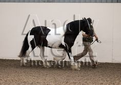 Topthorn Showing Show 22nd June 2014