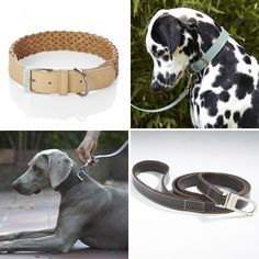 Modern Dog Beds, Bowls, Collars, and Leads by MiaCara in dining collars leads beds furniture