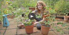 Vysněná zahrada: Už zase sleduji videa Alys Fowler