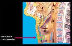 Traqueostomia e os cuidados de enfermagem ~ Enfermagem